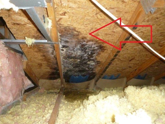 damp insulation