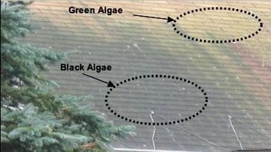 Algae Growth