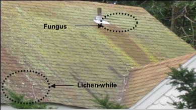 Algae, Lichen, Fungus